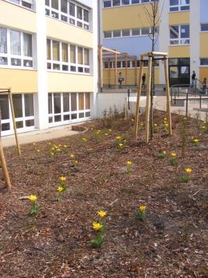 Foto zu Meldung: Frühlingserwachen auf dem Schulhof