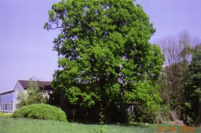Vorschaubild zur Meldung: Heinersdorf: Wettervorhersage für den diesjährigen Sommer 2009