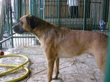 Foto zu Meldung: Hund sucht Herrchen