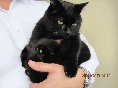 Falkensee De Schwarze Katze Zugelaufen