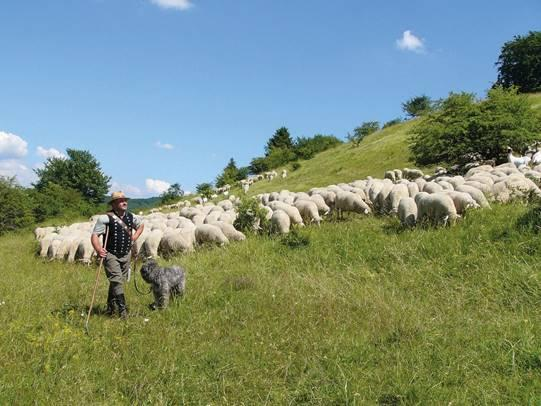Weidewonne © Landesverband Thüringer Schafzüchter / Reinhild Früh