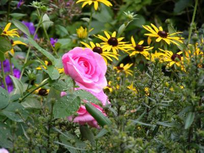 Foto zur Meldung: Einladung in den Frühlingsgarten und zum Staudentausch