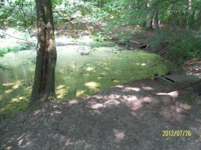 Foto zur Meldung: Der Gräninger Spring - geologische Besonderheiten dieses Quellgebietes