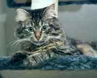 Foto zur Meldung: Tierschutzverein bittet dringend um Mithilfe