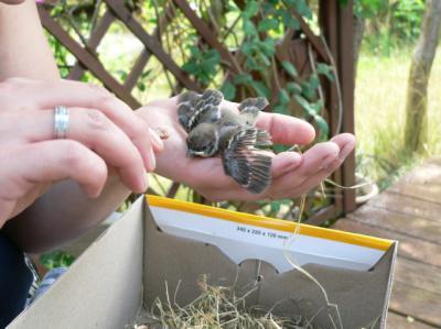 Foto zur Meldung: Tierische Fünflinge beim Bühnenaufbau gerettet