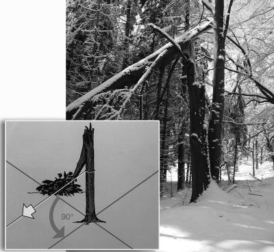 Foto zur Meldung: Gebrochene Bäume sicher fällen
