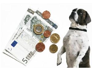 Vorschaubild zur Meldung: Hundesteuerbescheide 2019