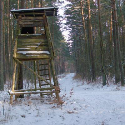 Foto zur Meldung: Wandertipp - Rehfelder Heide