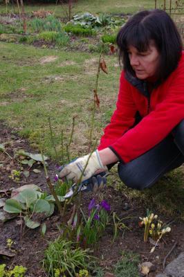 Foto zur Meldung: Rosenschnitt beginnt mit der Kirschblüte und nicht vor dem 15. April