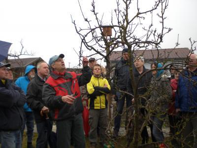 Foto zur Meldung: Obstbaum-Schnittkurs am 09.03.2013