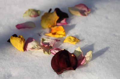 Foto zur Meldung: Getrocknete Rosenblütenblätter – eine hübsche Dekoration selbst gemacht
