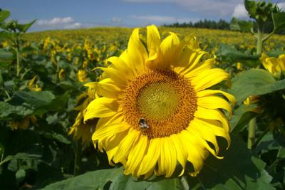 Foto zur Meldung: 20 Tonnen Honig aus Garzau