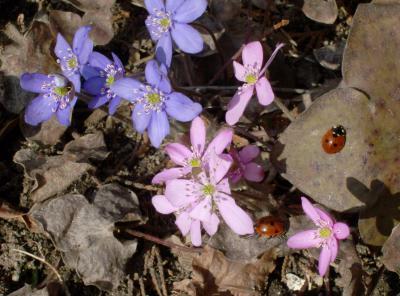 Foto zu Meldung: Blume des Jahres blüht