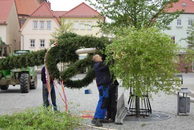 Foto zu Meldung: Calauer Maibaum wartet schon auf viele Gäste