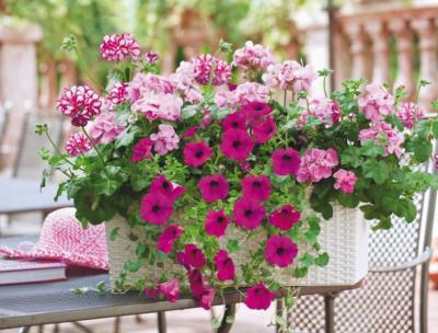 Vorschaubild zur Meldung: Blumenschmuckwettbewerb 2019
