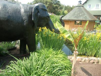 Foto zur Meldung: Viele Besucher in den Offenen Gärten