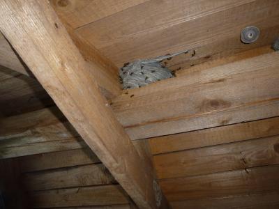 Vorschaubild zur Meldung: EINSATZ: Insekten (Wespennest)