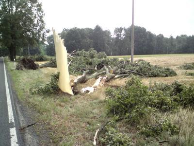 Bäume nach Unwetter beschädigt/Aufräumarbeiten laufen