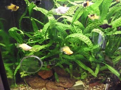 Foto zur Meldung: Welch ein Gewimmel im Aquarium!
