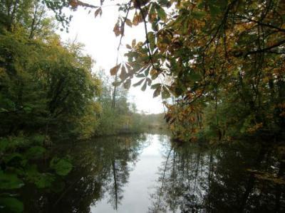 Foto zu Meldung: Herbstwanderung rund um den Herrensee