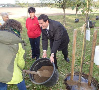 Foto zur Meldung: Ein Zwetschgenbaum für Nauheim