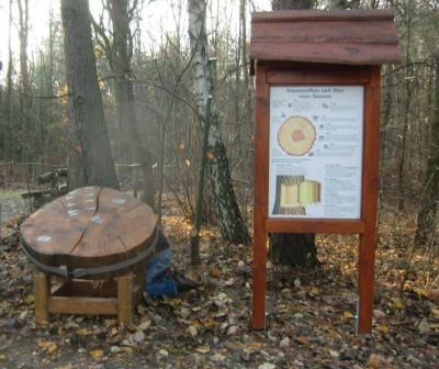 Foto zu Meldung: 165-jährige Baumscheibe am Naturlehrpfad
