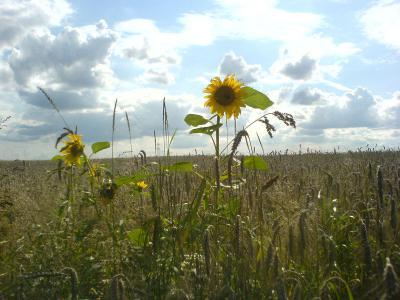 Foto zur Meldung: Studie: Bio spart Agrar-Folgekosten in Österreich