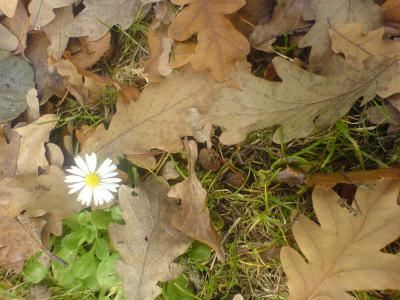 Foto zur Meldung: agrarheute.com: Daseinsvorsorge in landwirtschaftlicher Hand
