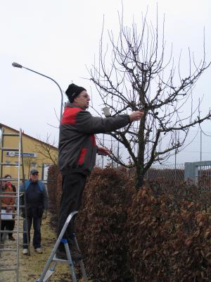 Foto zur Meldung: Obstbaum- und Strauchschneidekurs am 22.3.
