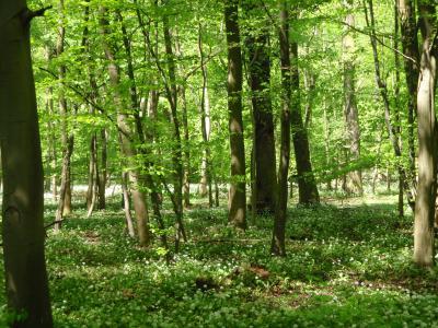 Foto zur Meldung: Gemeindewald Nauheim vorbildlich bewirtschaftet!