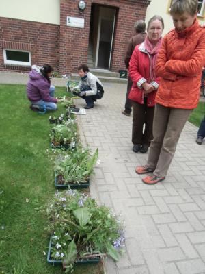 Foto zur Meldung: Pflanzentauschmarkt an der Heimatstube