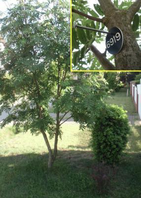 Foto zur Meldung: Die Baumnummer