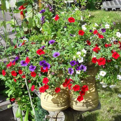 Foto zur Meldung: Mehr Garten geht nicht