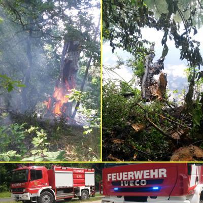 Foto zu Meldung: Baumbrand gelöscht