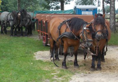 Foto zur Meldung: Straßenverunreinigung durch Pferde