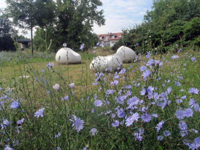 Foto zur Meldung: Blumenwiese im Rod - Naturschutz beginnt vor der Haustür