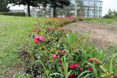 """Foto zur Meldung: """"Rosenbeete sind für mich kein Luxus"""", meint Wittstocks Bürgermeister"""