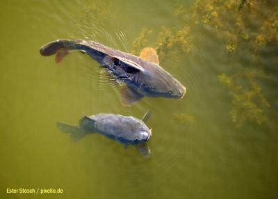 Foto zu Meldung: 60 Jahre Rehfelder Anglerverein