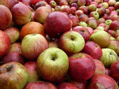 Foto zur Meldung: Apfelprojekt der Klassen 1 und 3