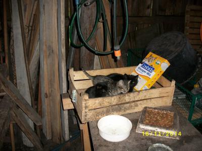 Foto zu Meldung: !!! Katzeneigentümer Gesucht !!!