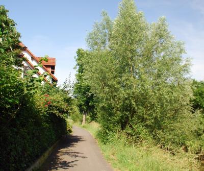Foto zur Meldung: Baumfällungen am Adolf-Menzel-Weg ab 3. März