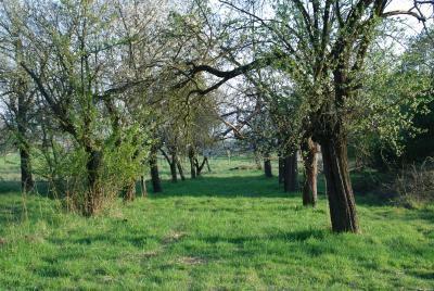 Foto zur Meldung: Kartierarbeiten zur Hessischen Lebensraum- und Biotopkartierung finden auch in Nauheim statt