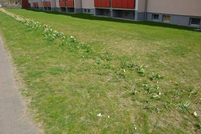 Foto zu Meldung: Schulweg oder ein täglicher Marsch durch das Blumenbeet