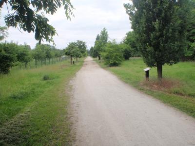 Foto zur Meldung: Kieswege zwischen Waldwiesengraben und Lärmschutzwall werden saniert