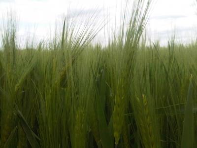Foto zur Meldung: Community Supported Agriculture: Solidarische Landwirtschaft mit Zukunft