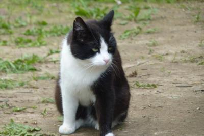 Foto zu Meldung: Fortschritte im Tierheim in Lettland