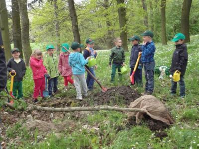 Foto zur Meldung: Die (Waldfüchse) Kita Reinstedt pflanzen einen Feldahorn