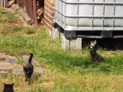 Foto zu Meldung: Katzen zu vermitteln