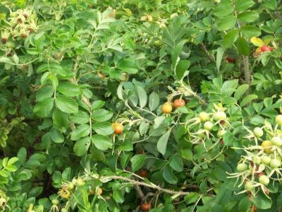 Foto zur Meldung: So groß wie Cherrytomaten