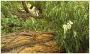 Foto zur Meldung: Wieder Sturmschäden auf dem BUGA-Gelände